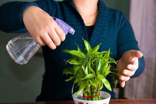 Spray Your Plants