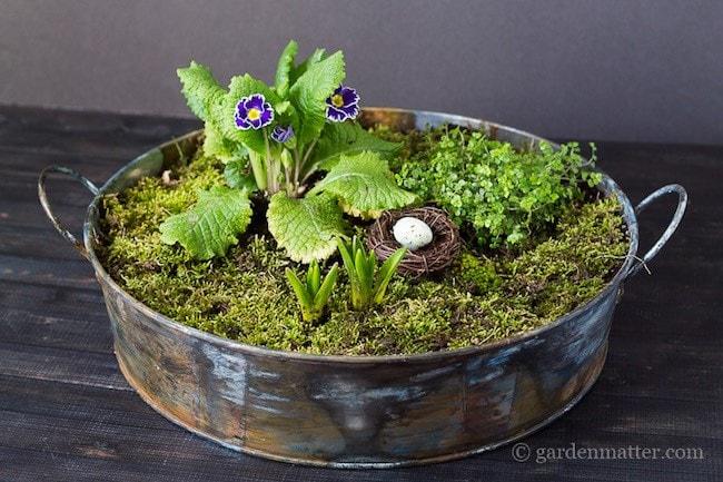 Moss Garden Spring Centerpiece
