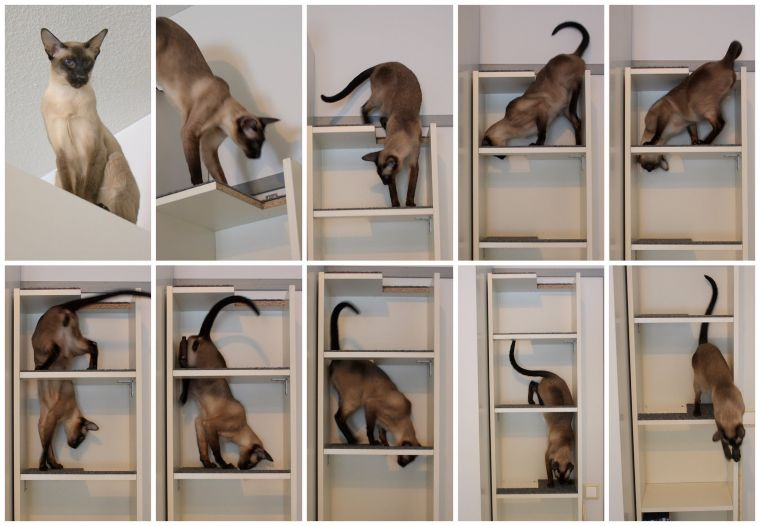 Cat Maze