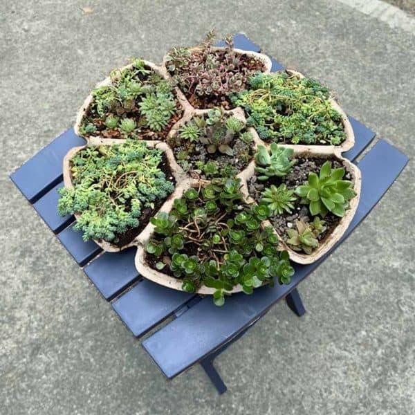 Multi-Compartment Succulent holder
