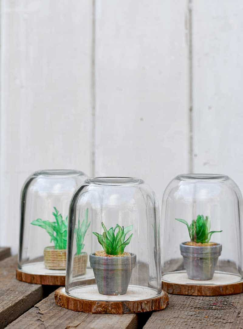 Artificial Succulent Glass Dome