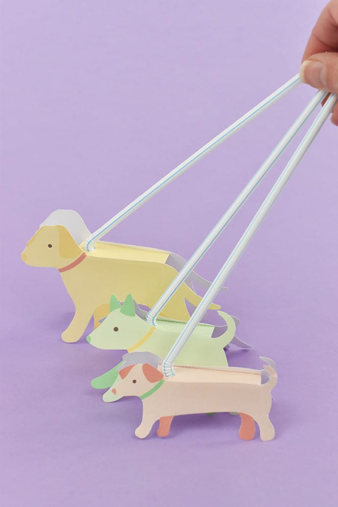 Dog Walking Toys