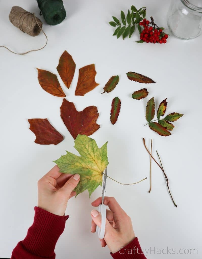 cutting stems from leaves