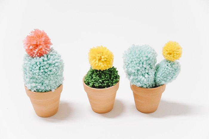Pom-Pom Cacti