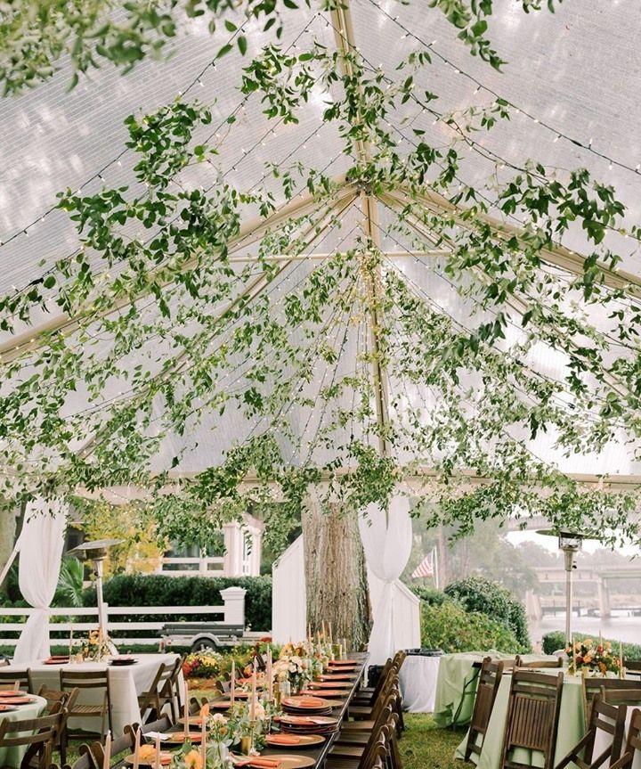 Ivy-Leaf Reception